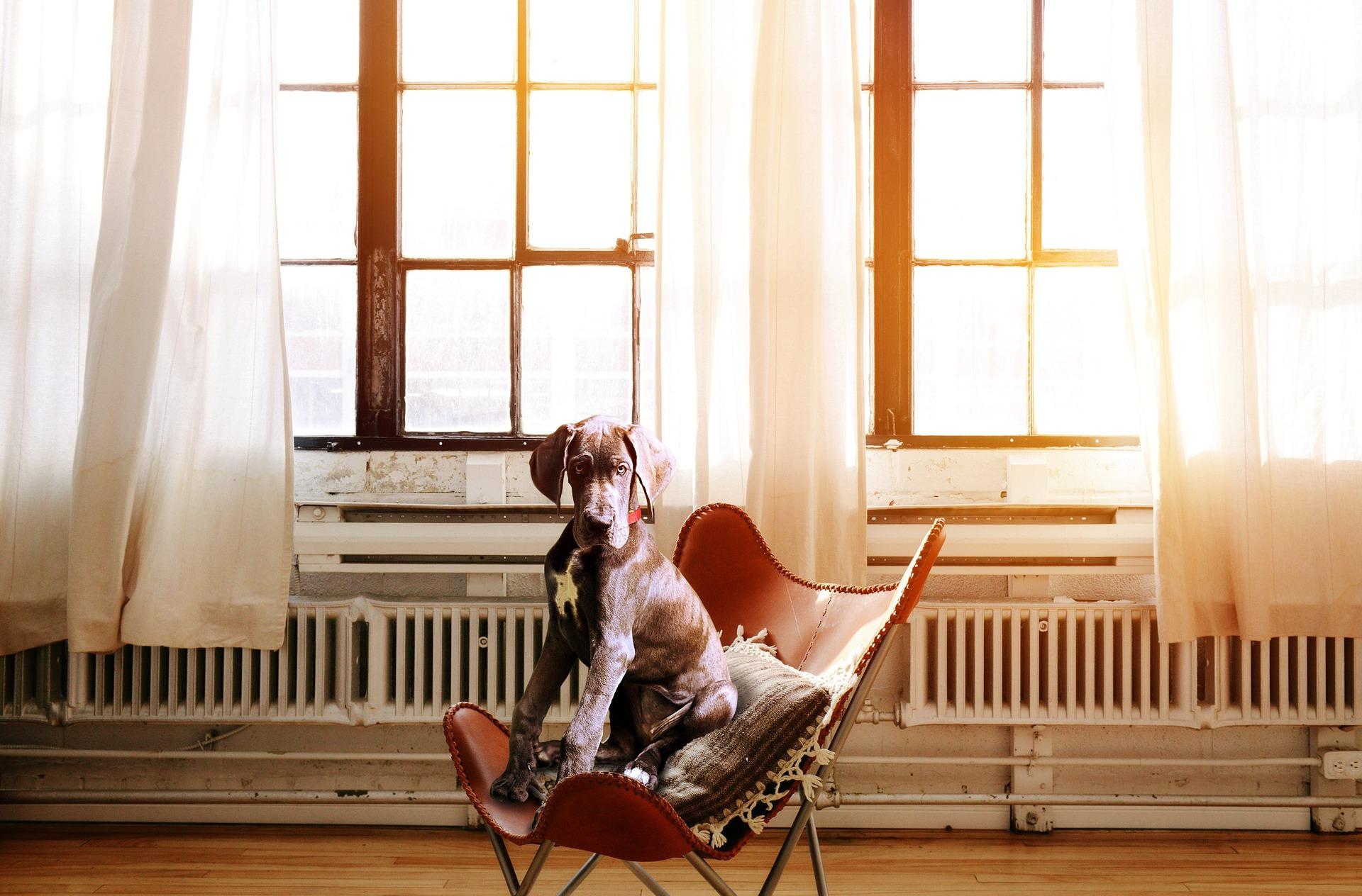 dog-2871914_1920